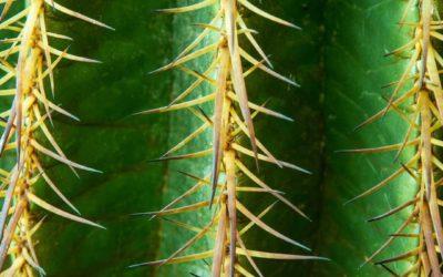 Kaktus ABC – D