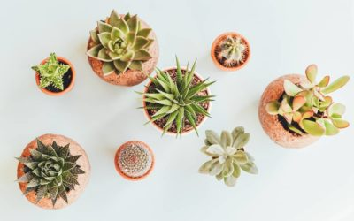 Kaktus ABC – F