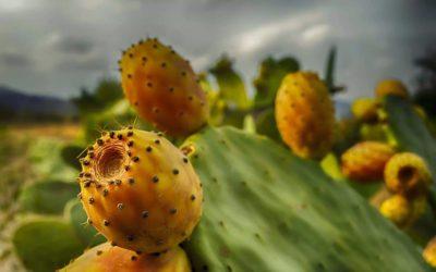 Kaktus ABC – J