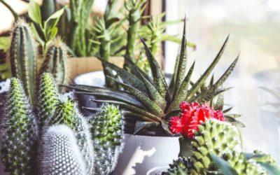 Kaktus ABC – L