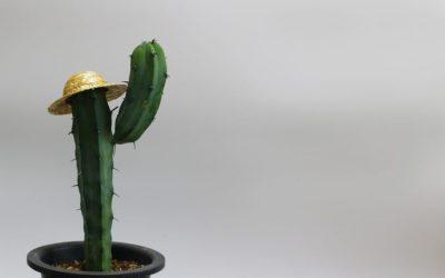 Kaktus ABC – N